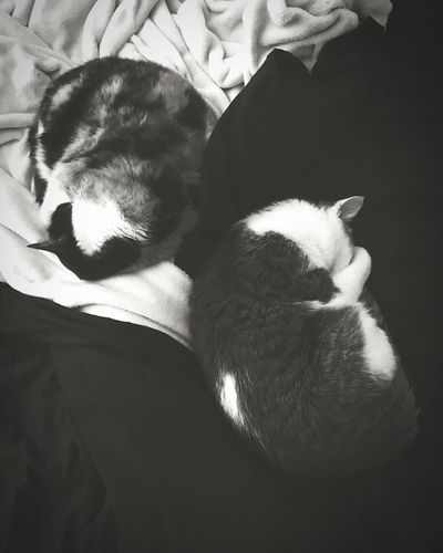 The Ying and Yang.