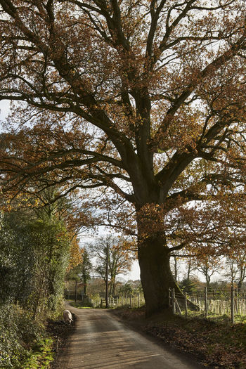 Afternoon Light Feeding  Magnificent New Forest, Hampshire. UK Winter Acorns Beauty In Nature Branch Day Foraging Growth Low Sun Nature No People Oak Tree Outdoors Pig Roadside Scenics Sky Snuffling Tranquility Tree Tree Trunk Uk