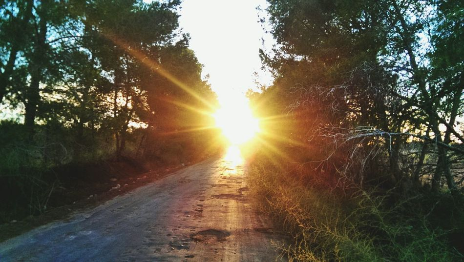 Check This Out Trees Road Nature_collection Sunset Eyem Best Shots Pictureoftheday