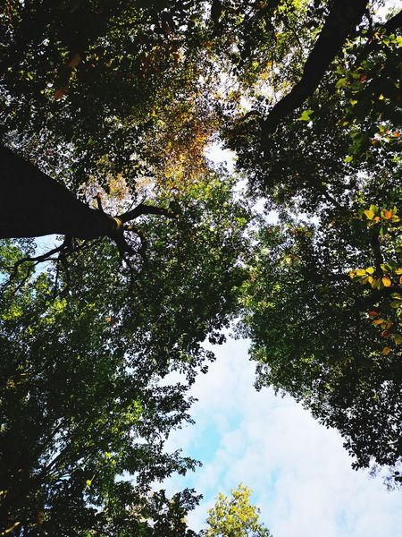 Worm's eye view Tree Branch Backgrounds Sky Leaves Fall Treetop Autumn Autumn Collection
