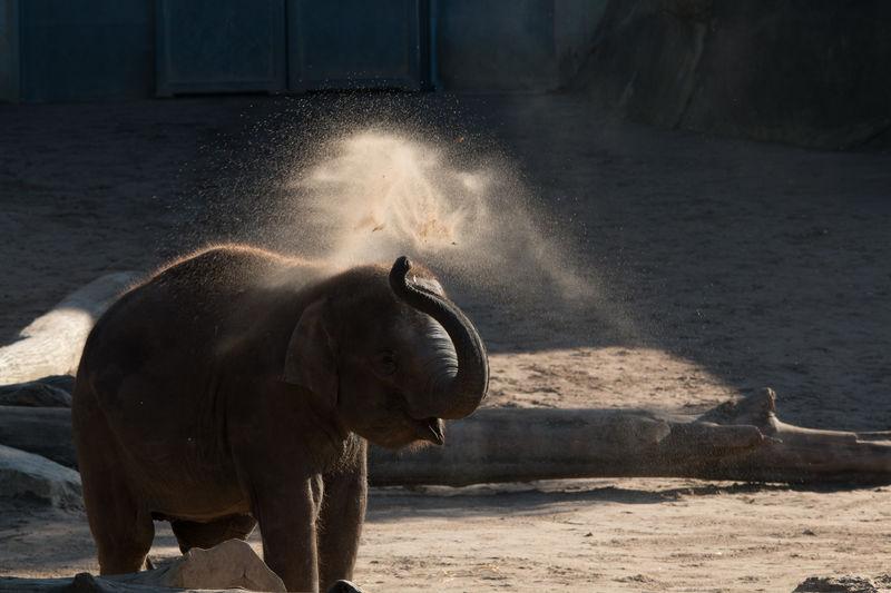 Animal Themes Elephant No People One Animal Outdoors