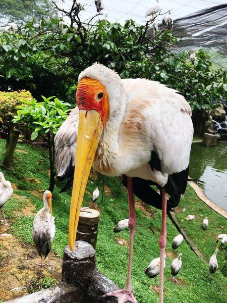 Stork Waterfall Bird Photography Bird Park Wildlife