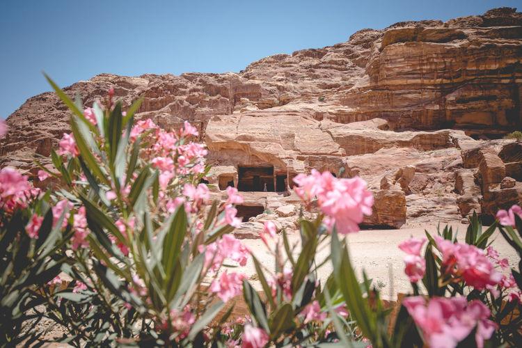Pink flowering plants against sky
