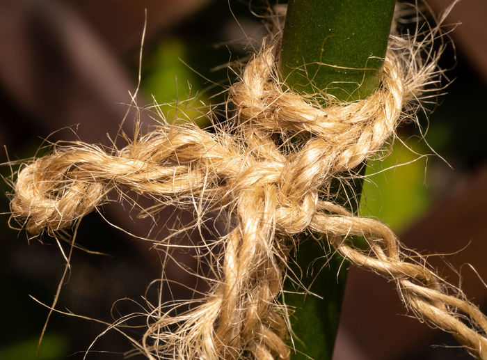 Rope Agriculture Selective Focus Focus On Foreground Nature No People Outdoors Brown Dry Close-up Still Life