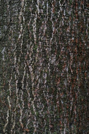 Full Frame Backgrounds No People Pattern Close-up Textured  Nature Beauty In Nature Outdoors Day Galaxy Bark Tree Wood Abstract Material Textured  Built Structure Building Exterior