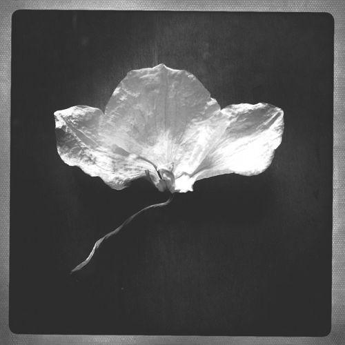 Flowerporn NEM Black&white NEM Still Life Shootermag