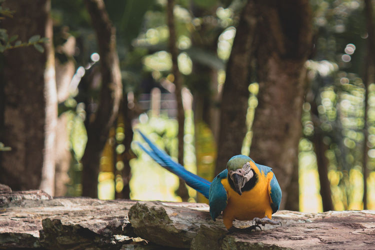 In front of a blue arara
