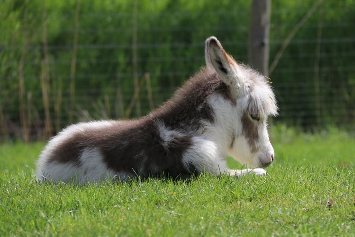 Animal Themes Close-up Cute Donkey Farm Life Field Field Grass One Animal Soft Softness Spring Young Pet Portraits