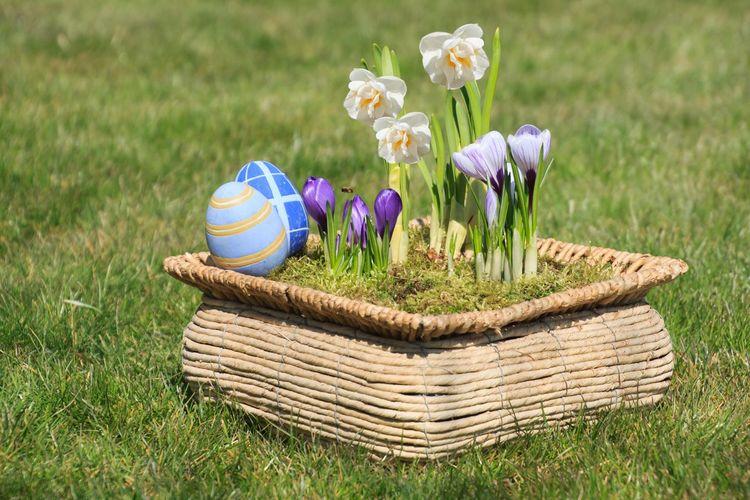 Close-up of purple flowers in basket on field