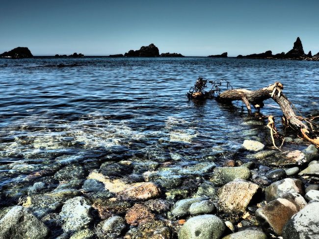 Sea and wood Shakotan Hokkaido Water Rock Solid Rock - Object Sea Nature Sky Beach Land Day Tranquility No People Scenics - Nature Clear Sky Beauty In Nature Tranquil Scene Animal Outdoors Non-urban Scene Pebble Marine Driftwood