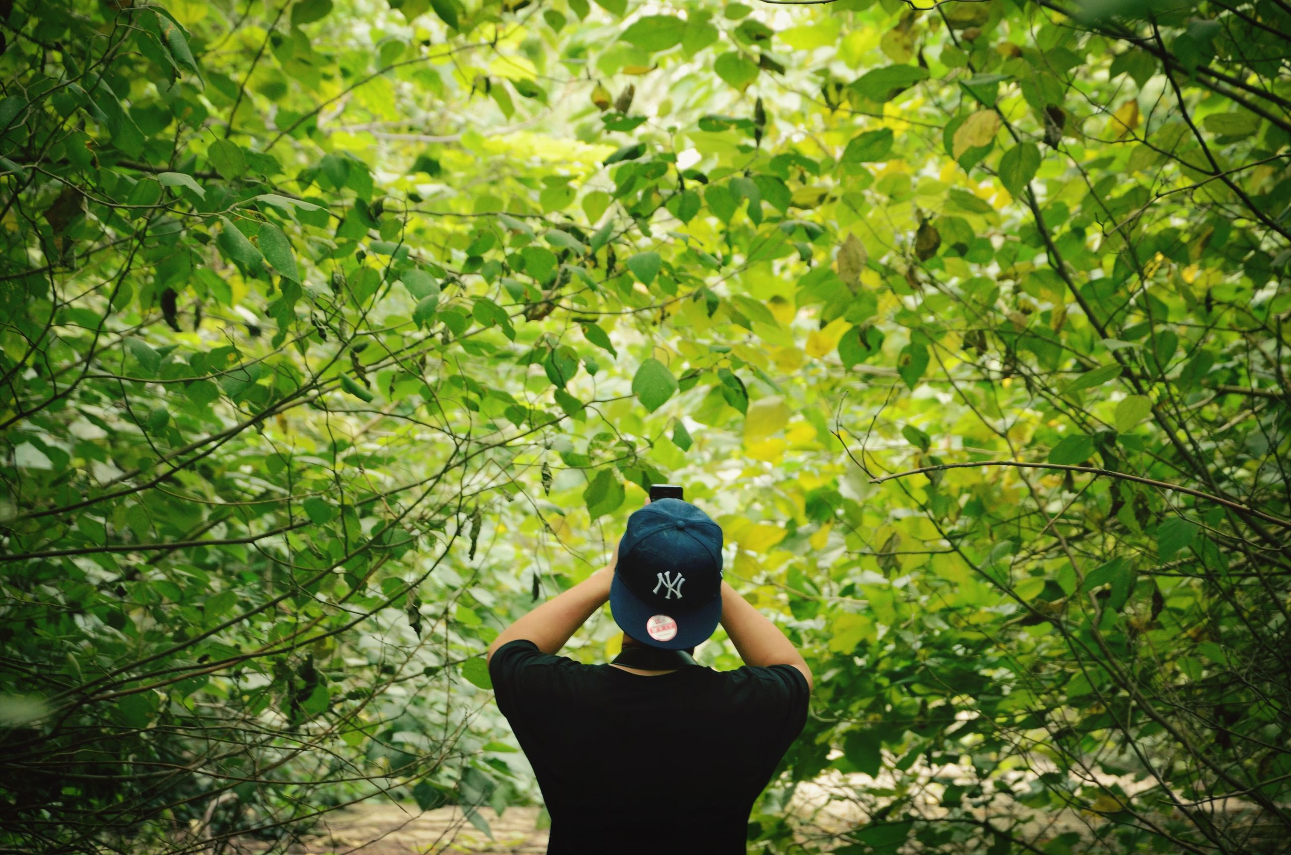 tree, lifestyles, standing, growth, leaf, branch, green color, leisure activity, nature, forest, low section, person, men, personal perspective, plant, casual clothing, outdoors