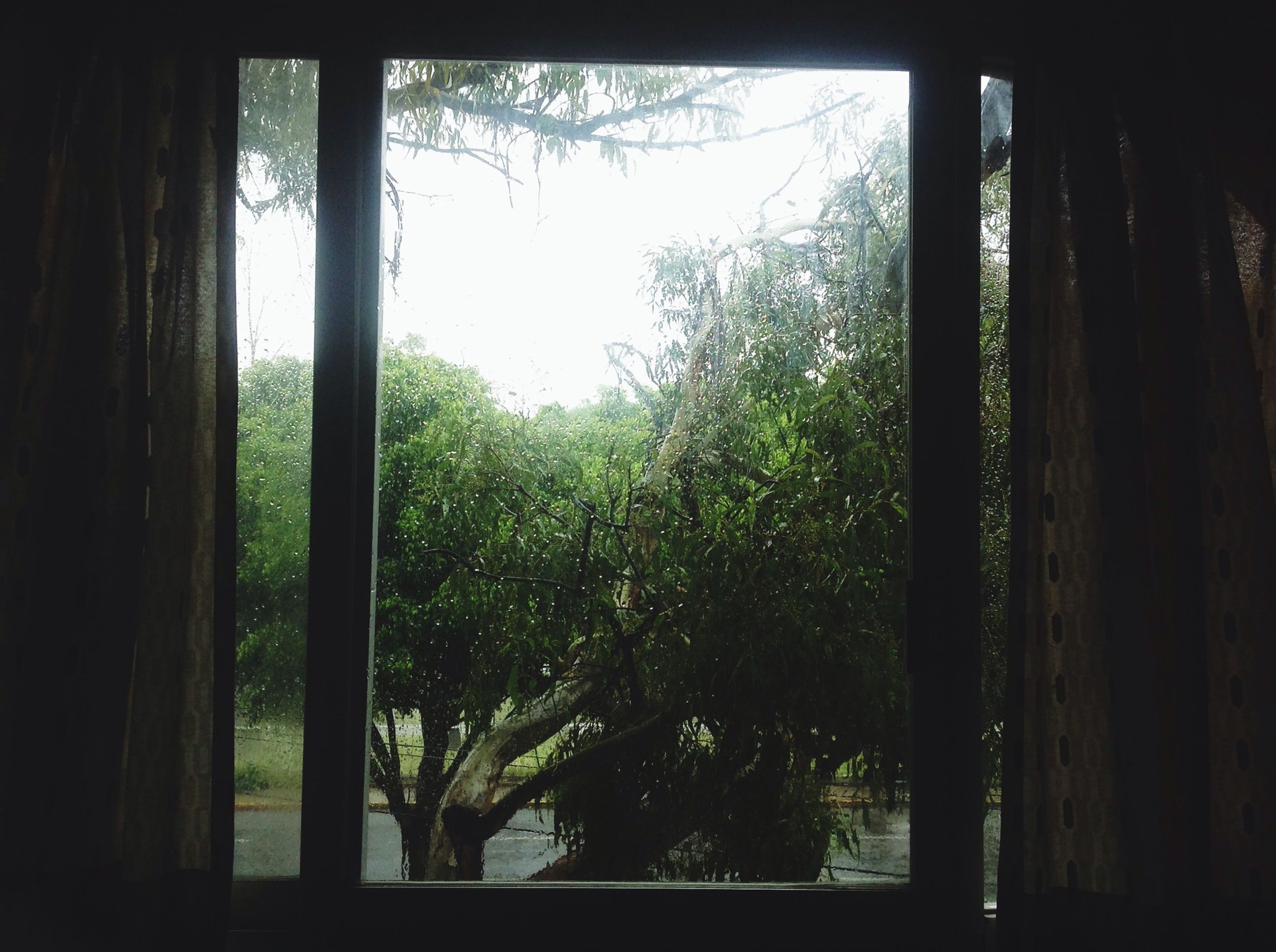 tree, window, indoors, growth, tree trunk, branch, nature, tranquility, green color, glass - material, transparent, day, silhouette, sunlight, no people, clear sky, sky, plant, tranquil scene, beauty in nature