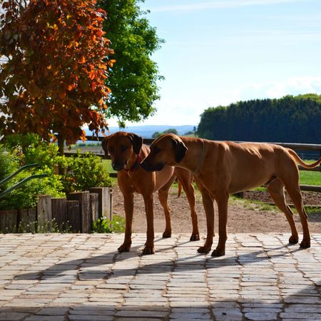 Animal Themes Tree Domestic Animals Outdoors Dog Day Sunlight Pets Nature Shadow No People Dogs Hunde Chiens Pet Portraits