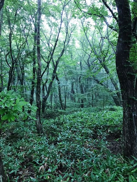 JEJU ISLAND  Tree Forest Nature Beauty In Nature Tranquility Tranquil Scene Scenics Growth Green Color Outdoors