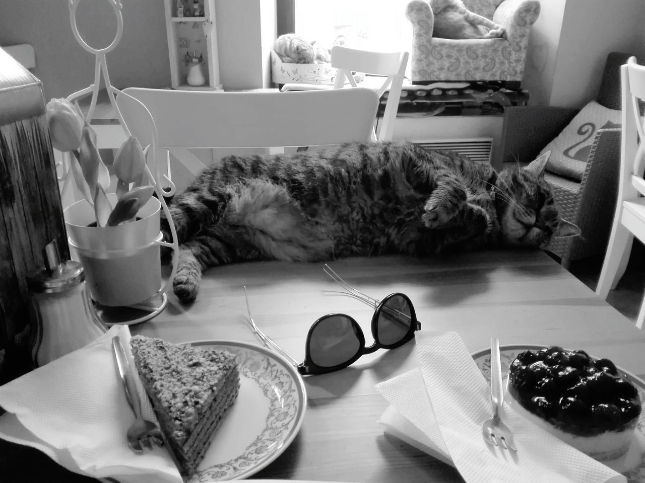 table, pets, cat, domestic cat, feline, domestic, indoors, domestic animals, animal, no people, mammal, vertebrate, animal themes, one animal, food and drink, home interior, food, drink, furniture, cup, breakfast