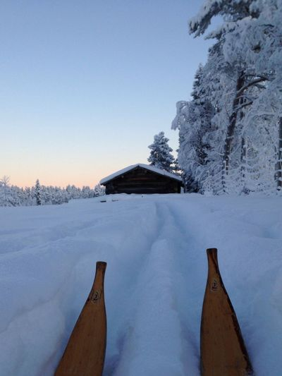 Cross Country Skiing Merry Christmas! Swedish Lapland