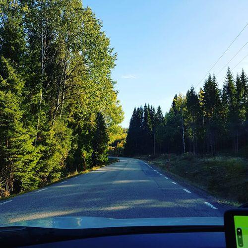 Tree Car Point