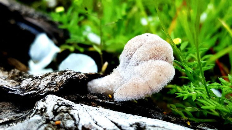 Nature Close-up No People Mushroom Outdoors Beauty In Nature Fungus Toadstool Freshness Grass Day Animal Wildlife One Animal Animal Themes EyeEm Best Shots EyeEmBestPics EyeEm Gallery EyeEmNewHere Casual Shooting Landscape