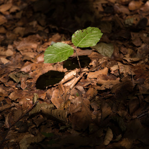 young tree Close-up Day Fragility Growth Leaf Light And Shadow Light Puddle Morning Nature No People Outdoors Young Tree