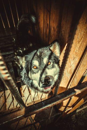 High angle portrait of dog on wood