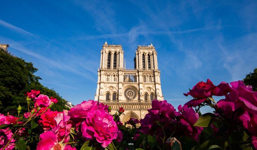 Paris Historic Cathedral Paris Travel Destinations Bestoftheday Photooftheday EyeEm Best Shots Flower Building Exterior Plant Sky Architecture Flowering Plant Built Structure Travel Building