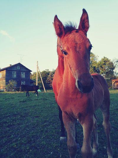 Foal First Eyeem Photo