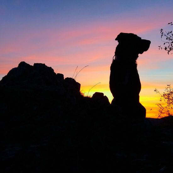 Outdoors Herbstspaziergang First Eyeem Photo Abendstimmung Herbstfarben Popular Photos Playing With My Dog My Dogs Are Cooler Than Your Kids Abendrot Schattenbild Playing With The Animals Silhouette Nature_collection Beauty In Nature