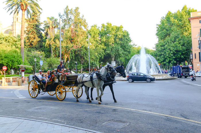 Horses Transport Transportation Carriage City Day Domestic Animals Horse Horse Cart Horse Trailer Horse Transportation Horsedrawn Mammal Men Mode Of Transport Nature Outdoors People Real People Sky Street Transportation Transportation Vehicle Tree Water Fountain