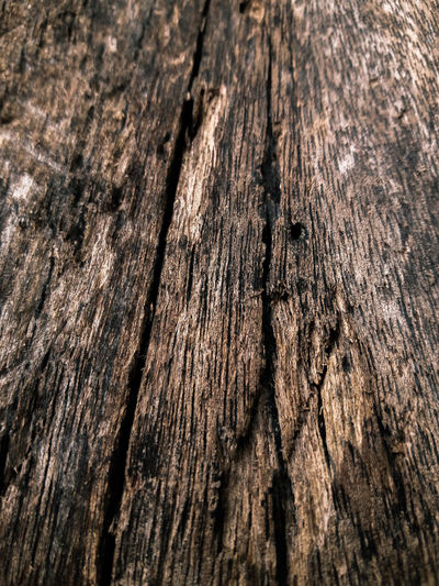 wood Tree Ring