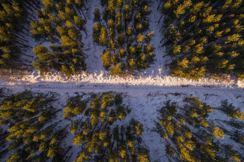 above the canopy, winter pine Aerial Shot Drone  Forest Light Pine Forest Snow Scape Aerial View Beauty In Nature Cold Temperature Forest Forest Trees Mountain Nature Sky Snow Sunlight, Shades And Shadows Top Down View Tree Winter
