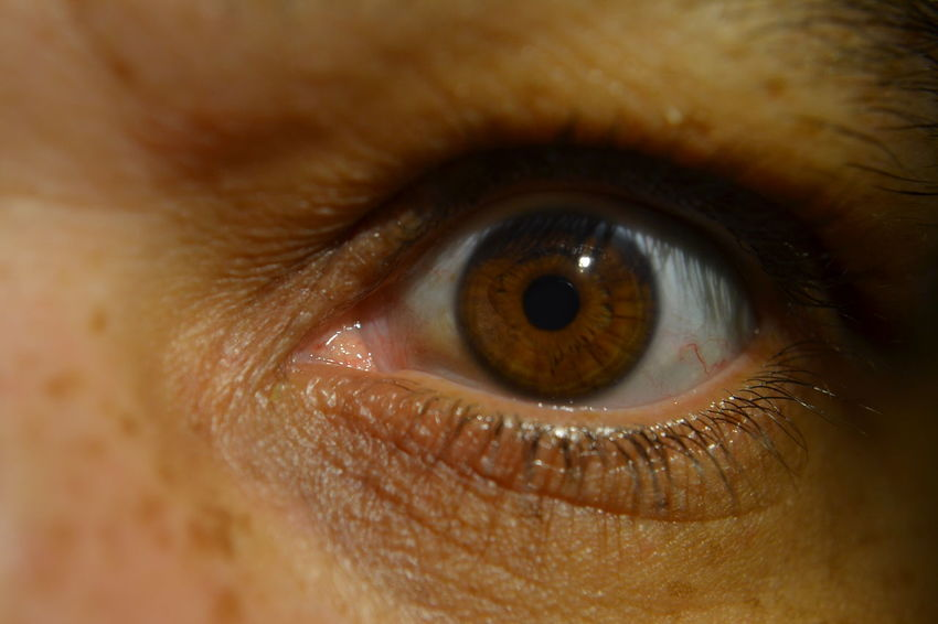 Auge Braune Augen Brown Eye Brown Eyes Close-up Extreme Close-up Eye Eyeball Eyelash Eyesight Human Eye Human Face Human Skin Iris - Eye Macro Sensory Perception Wimpern