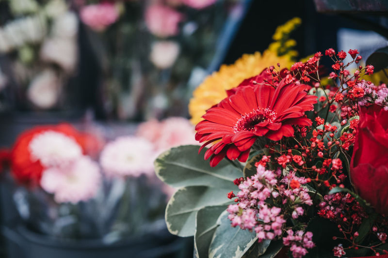 Close-up of flowers on sale at a florist shop, london, uk.