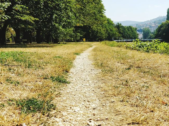Dirty Road On A Park Dirt Road Tree Nature Outdoors Grass No People Freshness Beauty In Nature Growth Day Field Sky Park - Man Made Space Lifestyles Beauty In Nature Authentic Moments Summertime