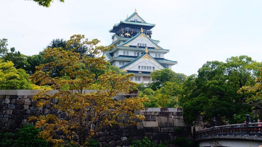 OSAKA Castle Osaka Castle History Historical Building Tree Architecture Building Exterior Built Structure Day No People Outdoors Flower Growth Travel Destinations Sky Nature