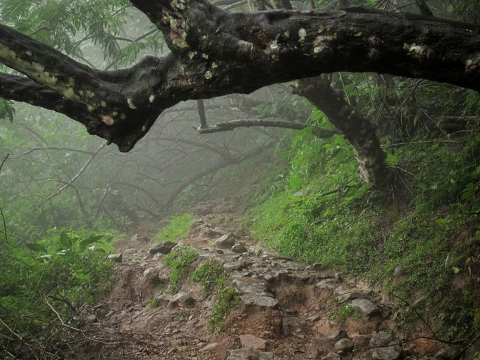 Nature Tree No People Growth Beauty In Nature Outdoors Backgrounds Concentric Day Awe Environment Jungle Trekking Jungle Beaten Path Beaten Off The Tracks Jungle Trips Adventure Exploration Explore Into The Unknown Alone Alone In The Woods Alone Trip Beauty In Nature Nature