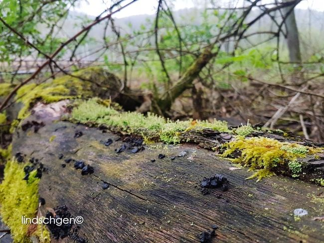 Waldspaziergang Outdoors EeYem Best Shots Beauty In Nature EyeEm Best Shots - Nature Glücklich Berlin Nature In Beauty EyeEm Nature Lover Beautiful Nature EyeEm Best Shots EyeEmBestPics Nature Baumstamm Baum 🌳🌲 Baumrinde Green Waldspaziergang Wald at Teufelssee, Berlin