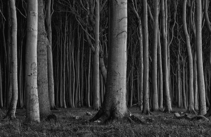 *dark forest* Mystic Nature Nature Photography Night Lights Nightphotography Tree Trees Forest Monochrome Monochrome Photography Mystery Nature_collection Night Outdoors Outside Spooky Woods