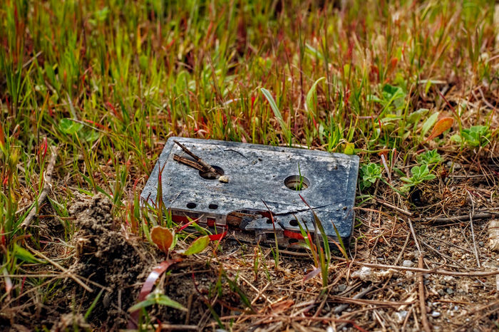 Old audio tape in the grass Audio Studio Hifi LP Animal Themes Audio Mixing Audio Tape Audiophile Cassette Cassette Collection Cassette Tape Close-up Day Field Grass Grass Area Nature No People Old Things Outdoors Thrown Away Vintage Visual Creativity
