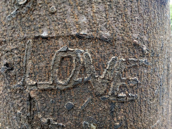 Textured  Full Frame Creativity Backgrounds Pattern Close-up No People Outdoors Mobile Photography Mobilephotography Tree Embossing On Tree Love Love ♥