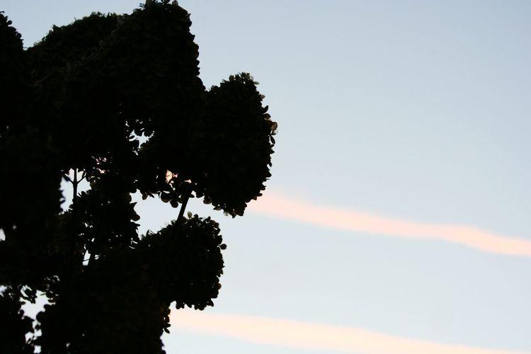 Sky Tree Nature