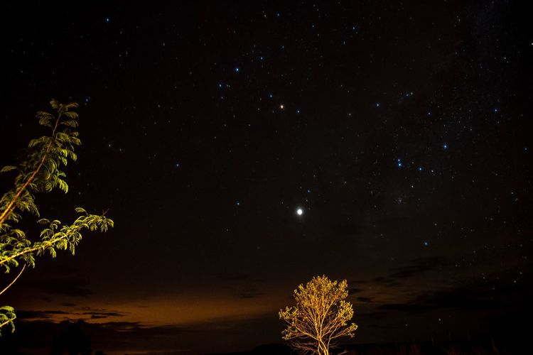 Low angle view of tree against sky at night