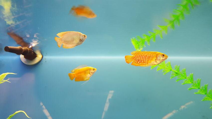 Fish Swimming Underwater Sea Life Blue Background Water Swimming Swim Petstore Aquarium