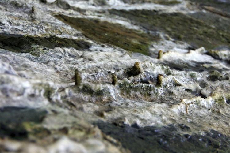 Close-up Deposits Limestone Rock Selective Focus Texture