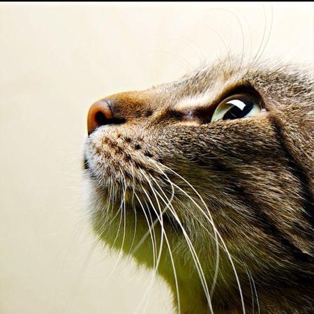 Welovecats ❤❤💍🤙🏽
