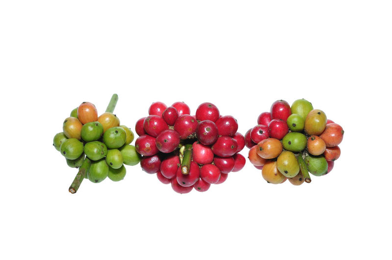 fresh coffee beans on white Studio Shot White Background Food And Drink Healthy Eating Food Still Life Indoors  Red Fruit Wellbeing Copy Space Freshness Green Color Cut Out Close-up Large Group Of Objects Multi Colored Group Of Objects No People Group Ripe