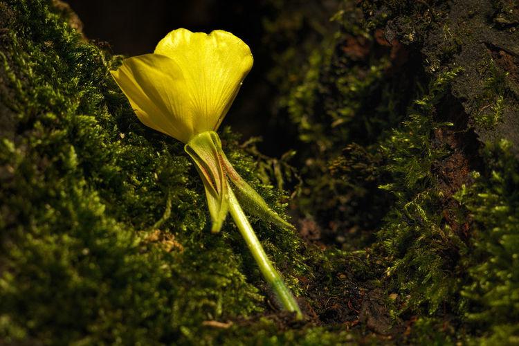 Resting on moss