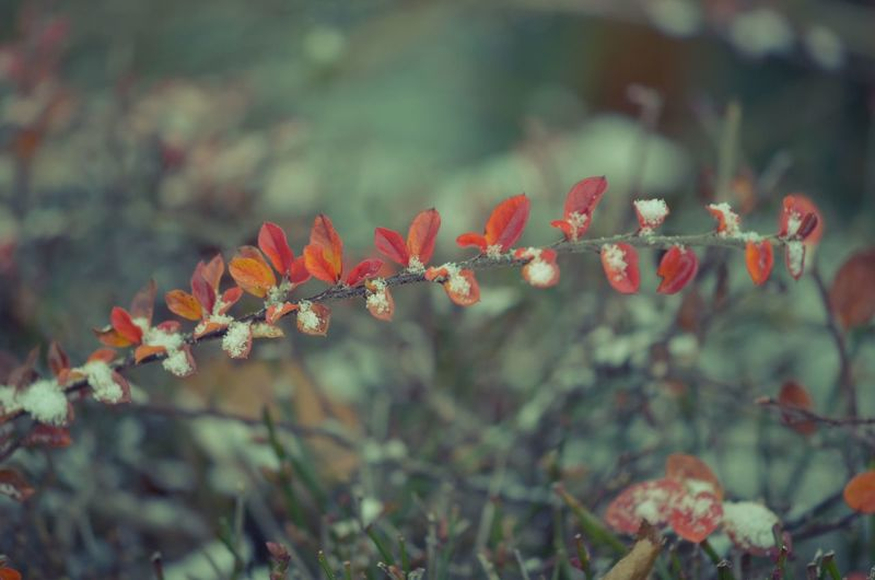 EyeEm Best Shots EyeEm Nature Lover Nikon Beauty In Nature Bestpic Close-up Day Focus On Foreground Fragility Freshness Growth Leaf Nature Nikonphotographer No People Outdoors Picoftheday Plant