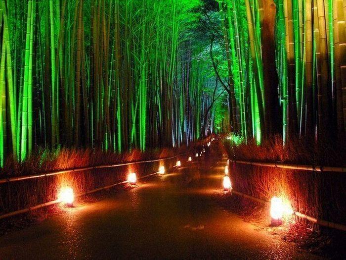бамбуковая аллея в Сухумском ботаническом саду