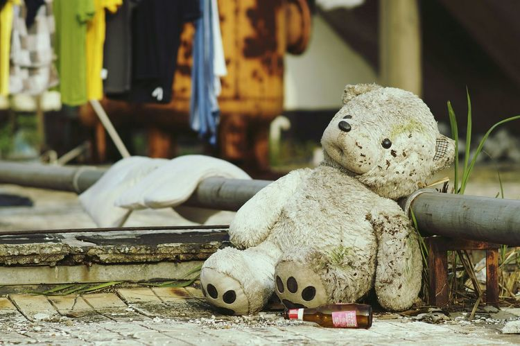 2015 ...he's been living here since 2012 at my dorm's rooftop The Photojournalist - 2015 EyeEm Awardsportrait Teddy Teddybear Popular Photos Wallpaper