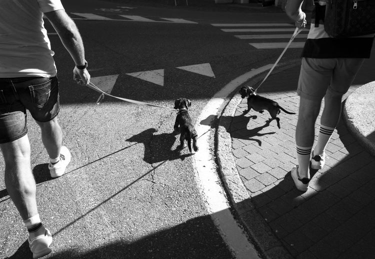 buddies 2getha City Life City Life Dog Dogs Everybodystreet Footpath Group Of People Leisure Activity Low Section Men Monochrome Photography Person Shadow Street Street Life Streetphotography Sunlight Two Is Better Than One Walking Beautifully Organized Walking The Dog Adapted To The City